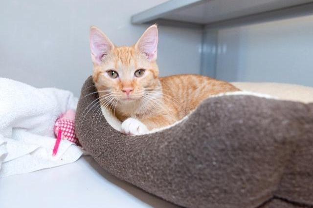 My name at SAFE Haven was Ronan and I was adopted!