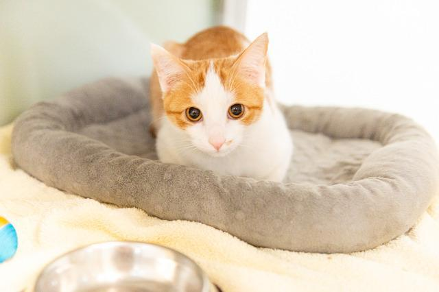 My name is Dawson and I am ready for adoption. Learn more about me!