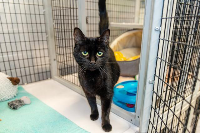 My name is Taylor and I am ready for adoption. Learn more about me!