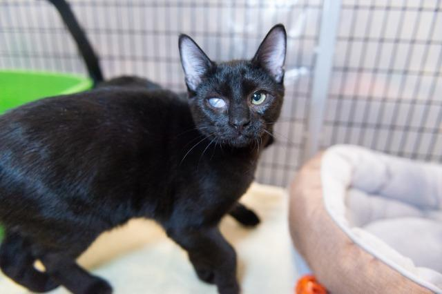 My name is Boo Boo and I am ready for adoption. Learn more about me!