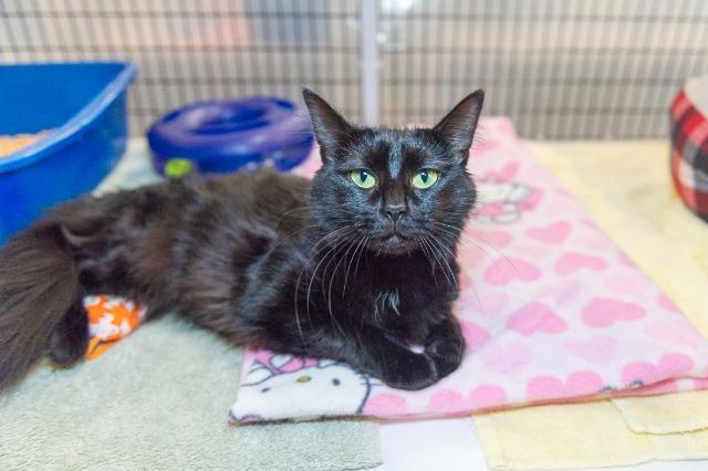 My name is Aaliyah and kids and I am ready for adoption. Learn more about me!