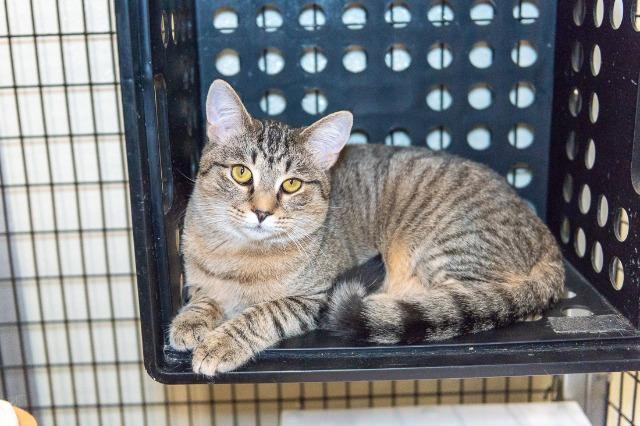 My name is Locke and I am ready for adoption. Learn more about me!
