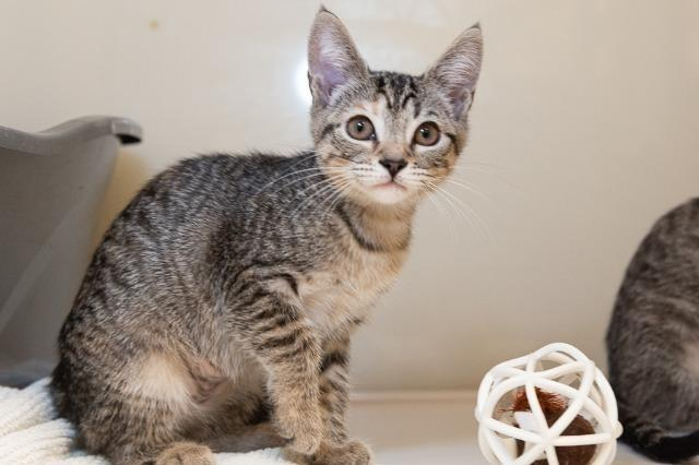 My name is Brigette and I am ready for adoption. Learn more about me!