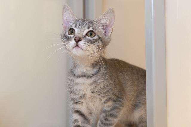My name at SAFE Haven was Brolin and I was adopted!