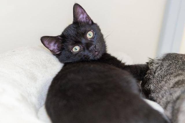 My name is Falafel and I am ready for adoption. Learn more about me!