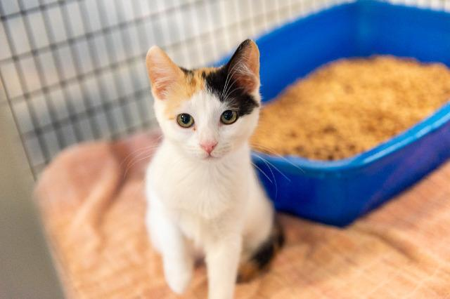 My name at SAFE Haven was Azura and I was adopted!