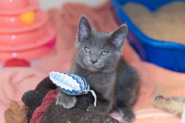 My name at SAFE Haven was Wyatt and I was adopted!