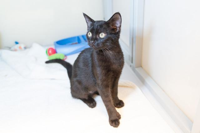 My name is Dreama and I am ready for adoption. Learn more about me!