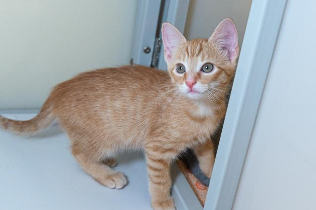 My name is Devlin and I am ready for adoption. Learn more about me!