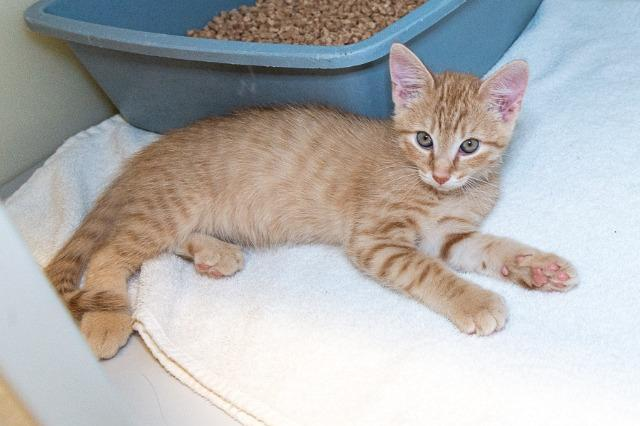 My name is Declan and I am ready for adoption. Learn more about me!