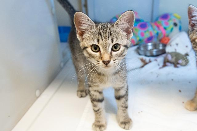My name is Dimitria and I am ready for adoption. Learn more about me!