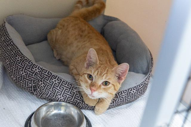 My name at SAFE Haven was Emilio and I was adopted!