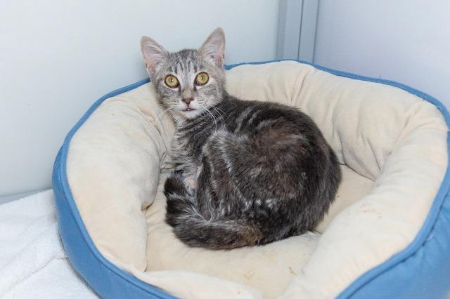 My name at SAFE Haven was Emaline and I was adopted!