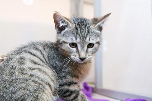 My name at SAFE Haven was Dorothy and I was adopted!