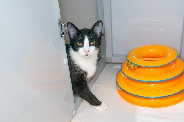My name is Nessa and I am ready for adoption. Learn more about me!