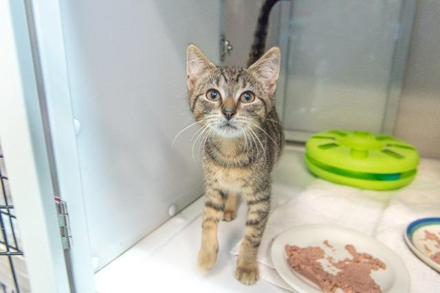 My name at SAFE Haven was Sweet Tart and I was adopted!