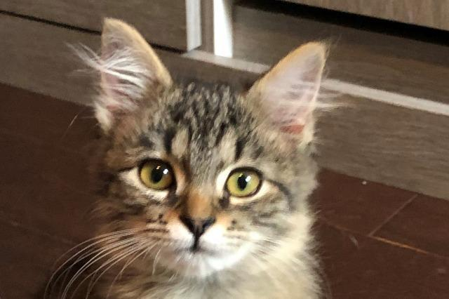 My name at SAFE Haven was Rikku and I was adopted!