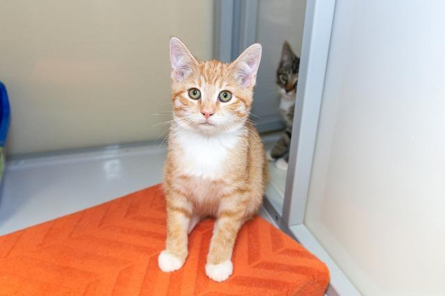 My name at SAFE Haven was Ciao and I was adopted!