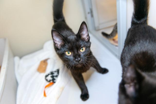 My name at SAFE Haven was Shalom and I was adopted!