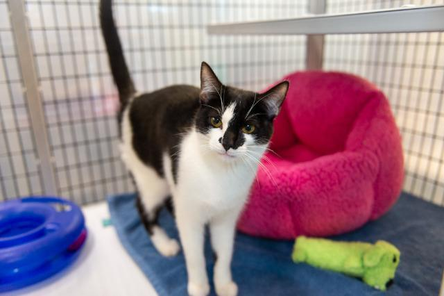 My name at SAFE Haven was Madison and I was adopted!