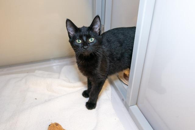 My name at SAFE Haven was Howdy and I was adopted!
