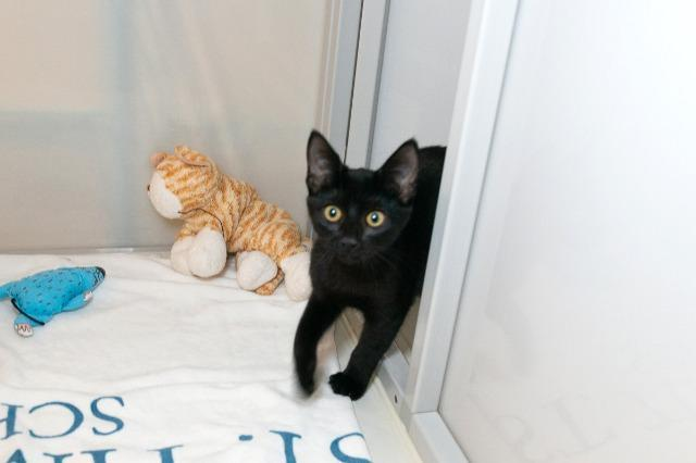 My name at SAFE Haven was Hola and I was adopted!