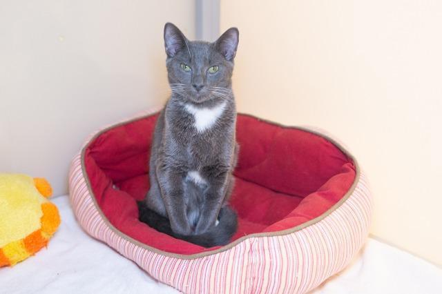 My name is Toucan Sam and I am ready for adoption. Learn more about me!