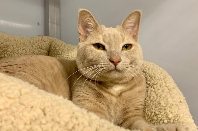 My name is Goldilocks and I am ready for adoption. Learn more about me!