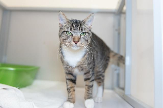 My name at SAFE Haven was Spiced Cider and I was adopted!