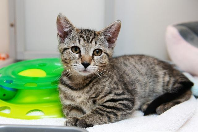 My name is Elphaba and I am ready for adoption. Learn more about me!