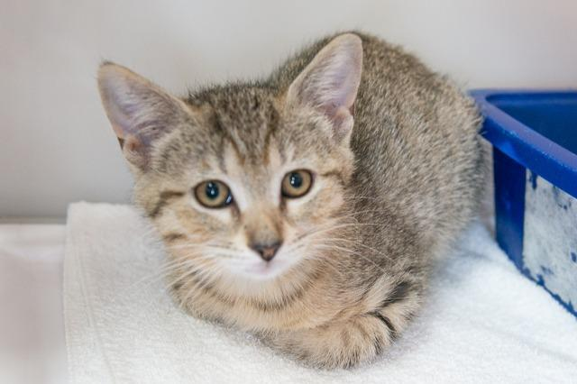 My name at SAFE Haven was Nessarose and I was adopted!