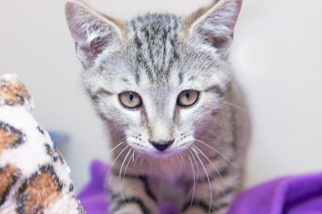 My name at SAFE Haven was Scarecrow and I was adopted!