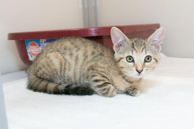My name at SAFE Haven was Princess Ozma and I was adopted!