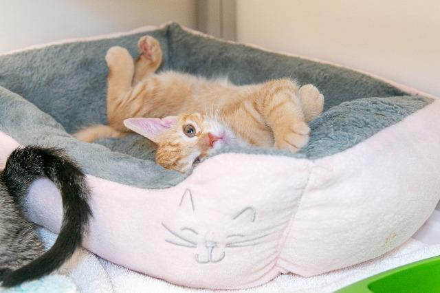 My name at SAFE Haven was Tin Woodman and I was adopted!