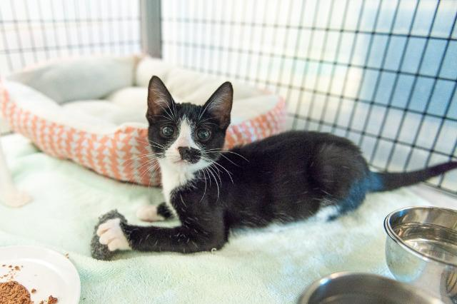 My name at SAFE Haven was Mazarin and I was adopted!