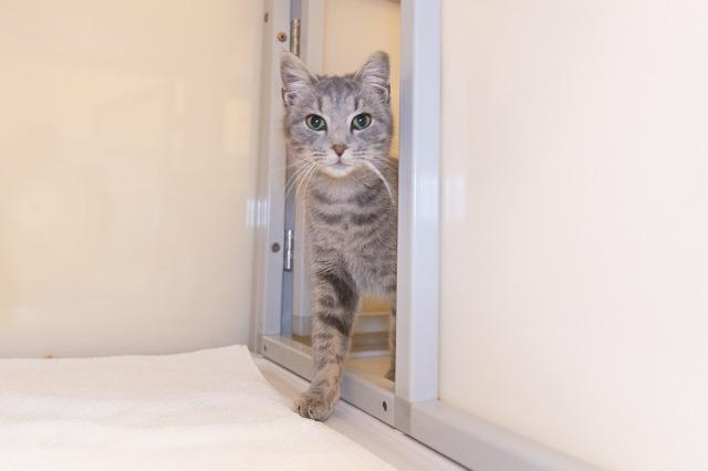 My name at SAFE Haven was Hampstead and I was adopted!