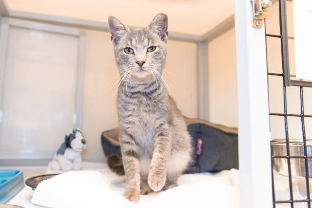 My name is Kingsbury and I am ready for adoption. Learn more about me!