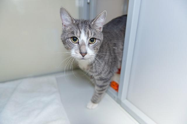 My name is Kandinsky and I am ready for adoption. Learn more about me!