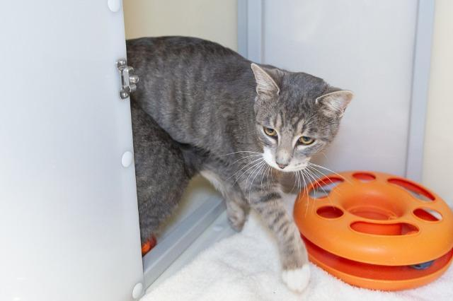 My name is Warhol and I am ready for adoption. Learn more about me!
