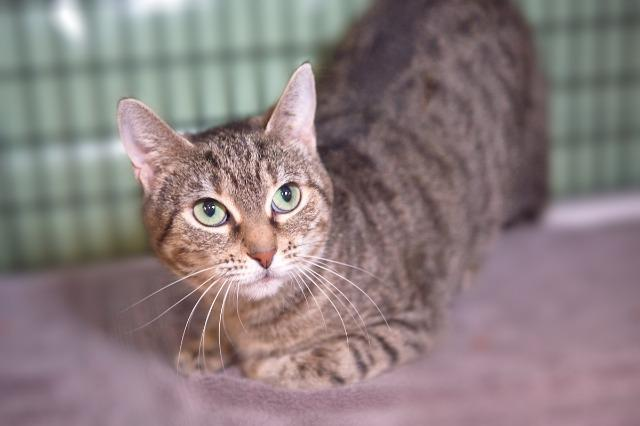 My name is Eva and I am ready for adoption. Learn more about me!