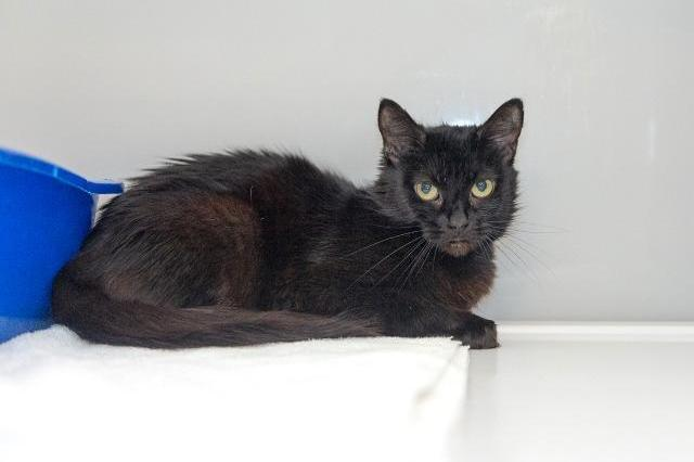 My name is Mickalene and I am ready for adoption. Learn more about me!