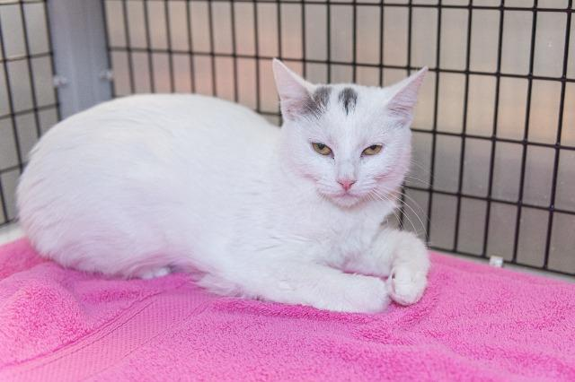 My name at SAFE Haven was Andora and I was adopted!