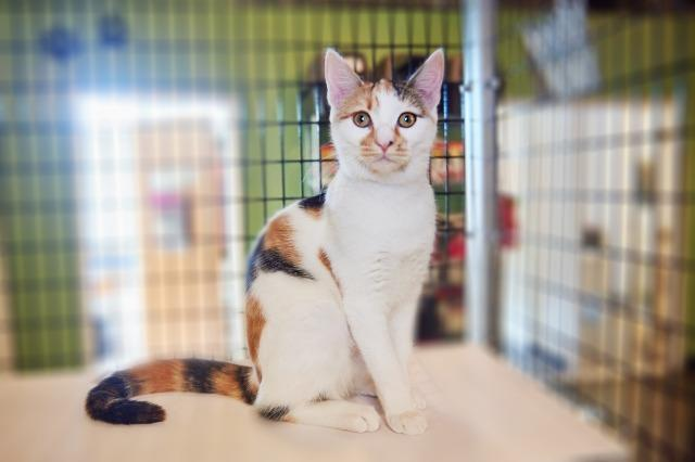 My name at SAFE Haven was Samira and I was adopted!