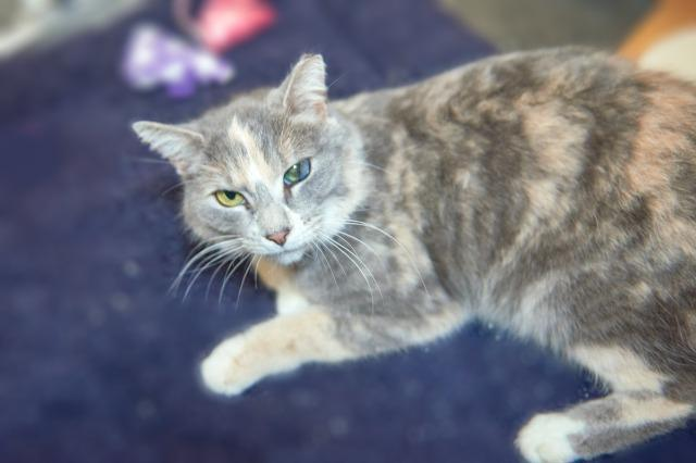 My name is Baylee and I am ready for adoption. Learn more about me!