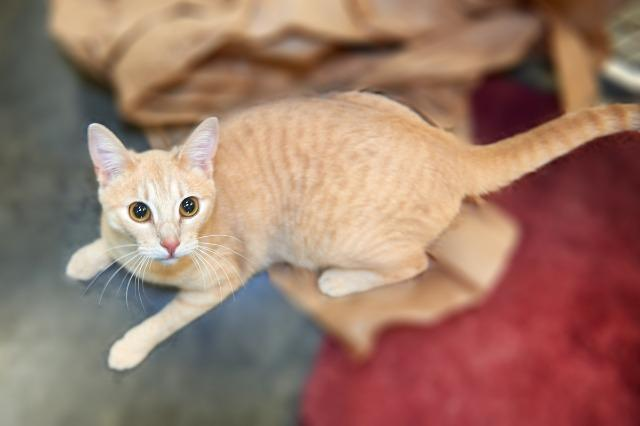 My name is Carmelita and I am ready for adoption. Learn more about me!