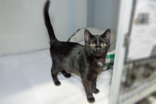 My name at SAFE Haven was Caterpillar and I was adopted!