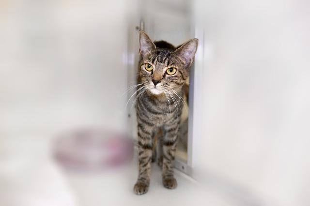 My name is Hoagie and I am ready for adoption. Learn more about me!