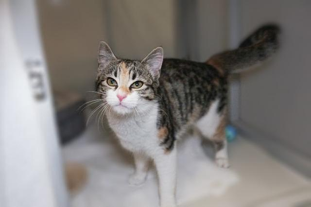 My name at SAFE Haven was Madalene and I was adopted!