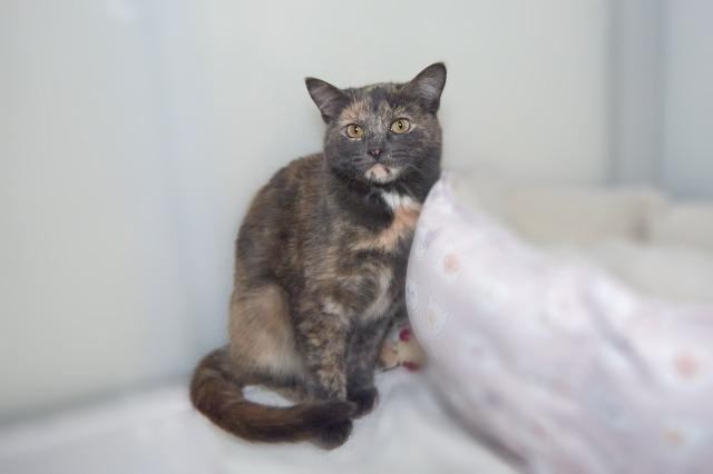My name is Rosalyn and I am ready for adoption. Learn more about me!