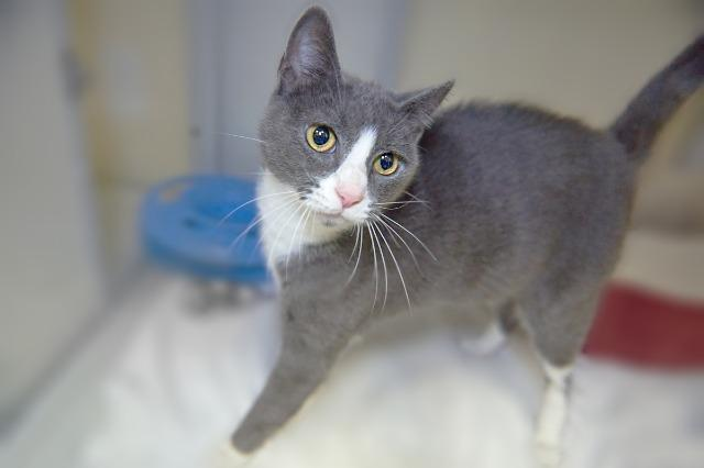 My name is Claryssa and I am ready for adoption. Learn more about me!